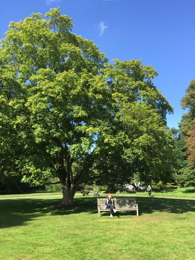 ロンドンの大きな木の下でくつろぐ